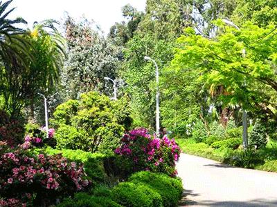 Батуми-ботанический-сад